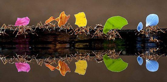 1-jptax-foto-hormigas